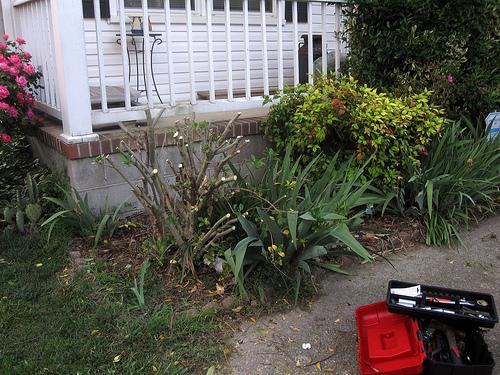 garden trimmer photo